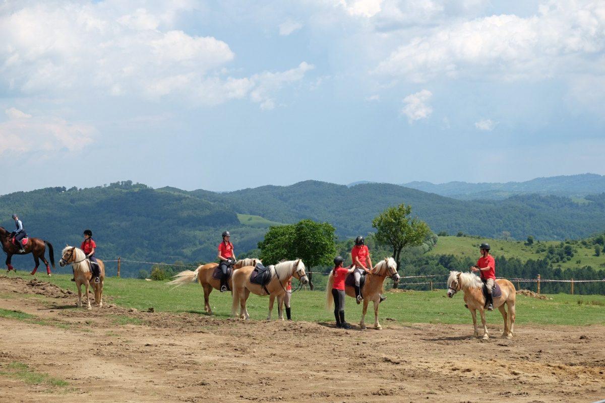 Plimbari cai