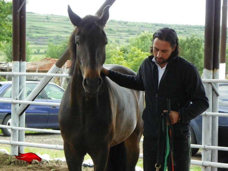 dresaj-natural-pe-equitana.ro-denis-stefan-1024x768