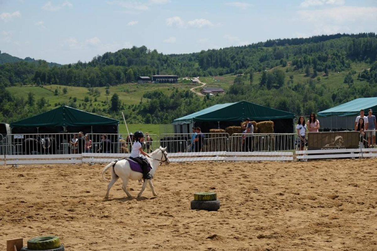Working Equitation_5
